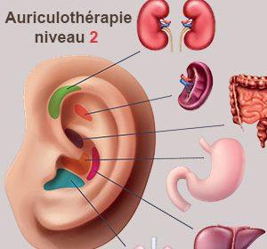 auriculotherapie-niveau-lyon-formation.jpg-nogier